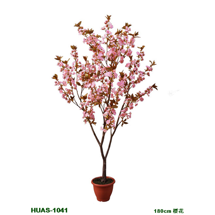 盆栽樱花树cherry blossom in pot (3).jpg