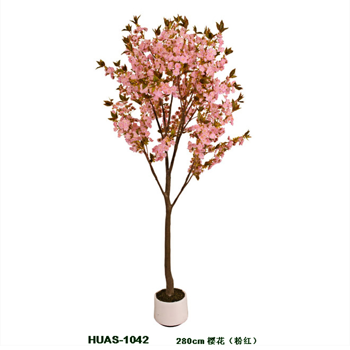 盆栽樱花树cherry blossom in pot (4).jpg